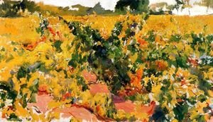 Vineyards study